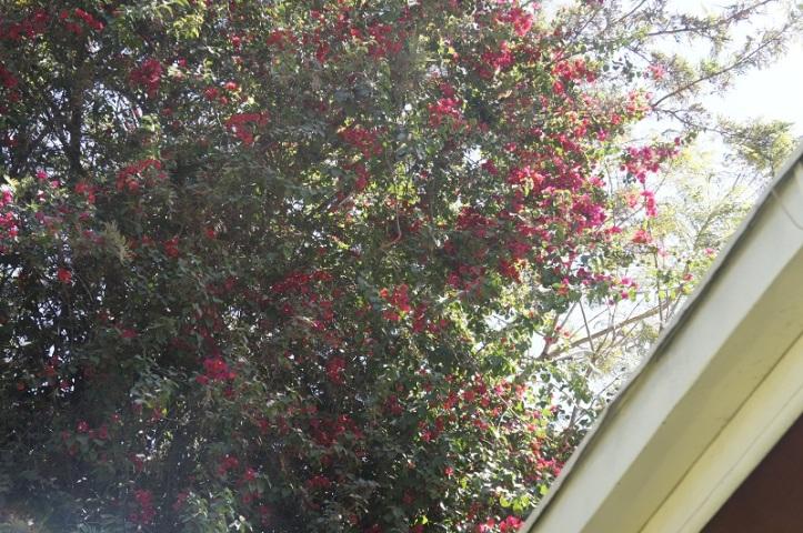 Ethiopian Flora