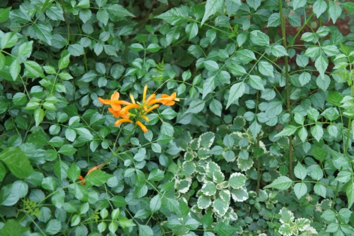Kenyan flora 2