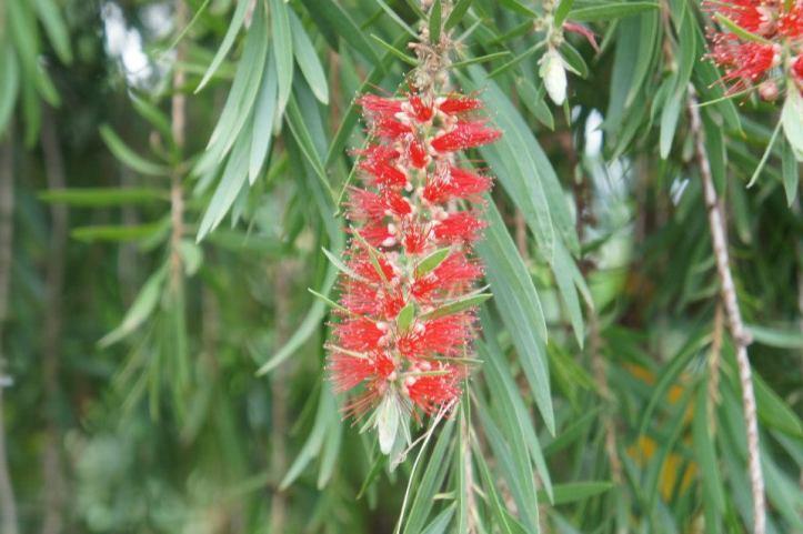kenyan flora 3