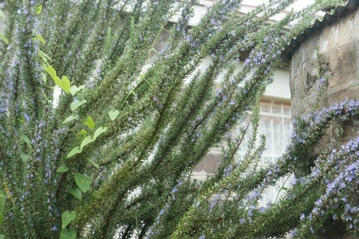 kenyan flora
