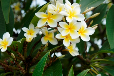 Flowers in Bahir Dar, Ethiopia