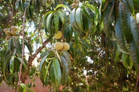 Mystery fruit. I have no idea what this is.